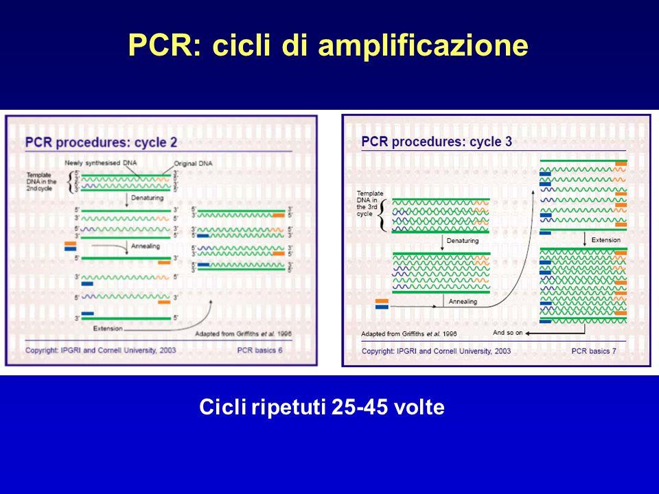 PCR: cicli di amplificazione Cicli ripetuti 25-45 volte