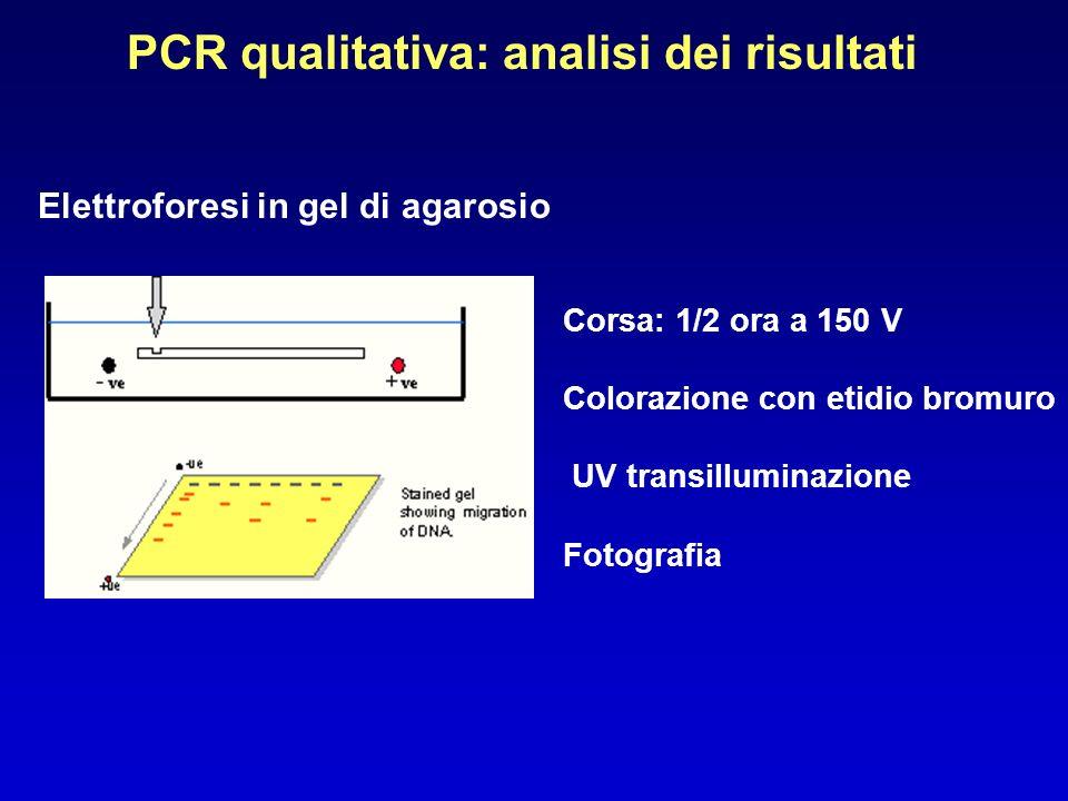 PCR qualitativa: analisi dei risultati Elettroforesi in gel di agarosio Corsa: 1/2 ora a 150 V Colorazione con etidio bromuro UV transilluminazione Fo