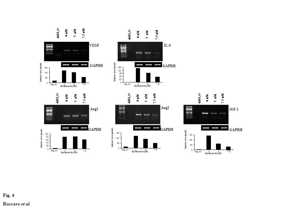 Fig. 4 Roccaro et al. GAPDH Ang2 ddH 2 O 0 nM 5 nM 7.5 nM 0 50 100 150 neg ctrl057.5 Bortezomib [nM] Interior area (pixel) Ang1 GAPDH ddH 2 O 0 nM 5 n