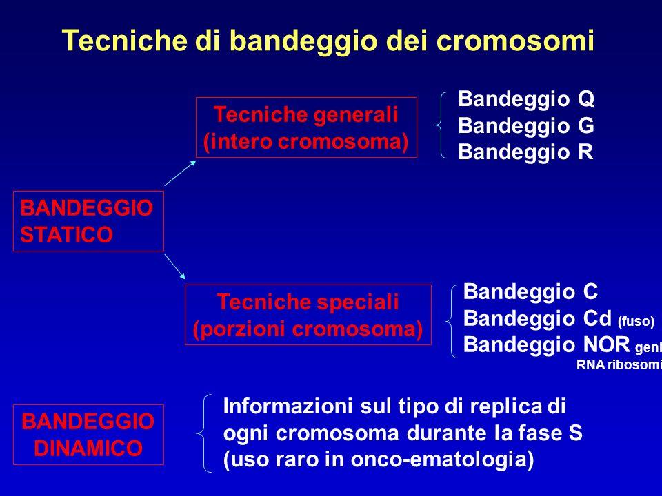 Tecniche di bandeggio dei cromosomi Tecniche generali (intero cromosoma) Bandeggio Q Bandeggio G Bandeggio R BANDEGGIO STATICO Tecniche speciali (porz