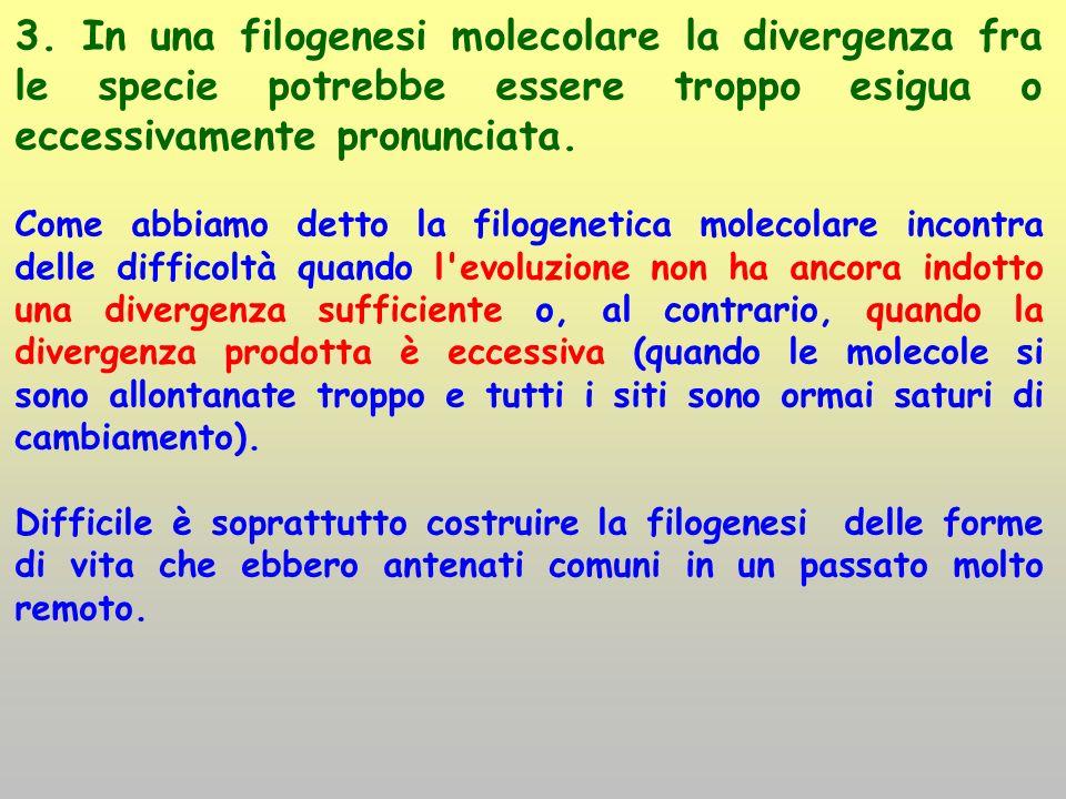 3. In una filogenesi molecolare la divergenza fra le specie potrebbe essere troppo esigua o eccessivamente pronunciata. Come abbiamo detto la filogene