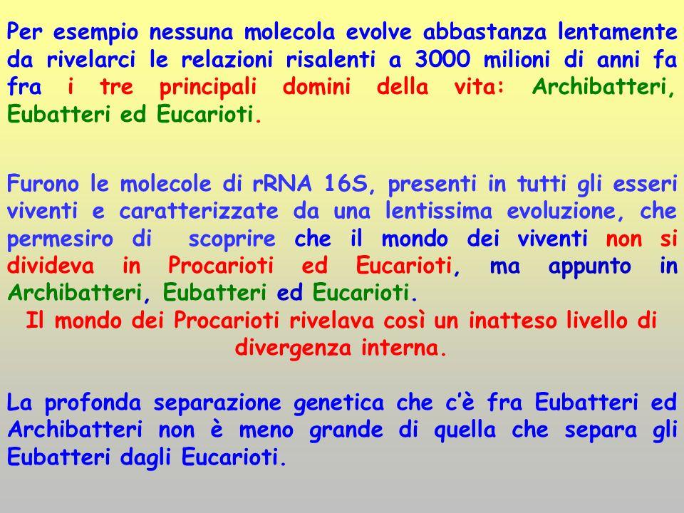 Furono le molecole di rRNA 16S, presenti in tutti gli esseri viventi e caratterizzate da una lentissima evoluzione, che permesiro di scoprire che il m