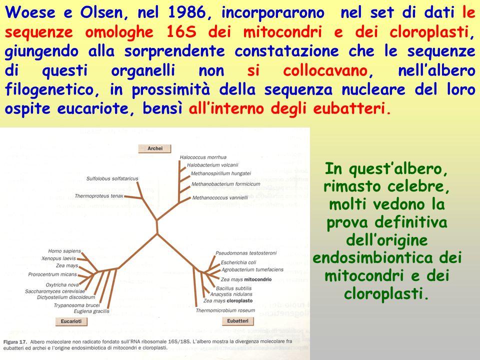 Woese e Olsen, nel 1986, incorporarono nel set di dati le sequenze omologhe 16S dei mitocondri e dei cloroplasti, giungendo alla sorprendente constata
