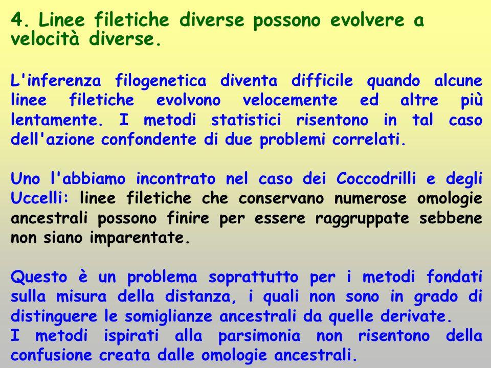 4. Linee filetiche diverse possono evolvere a velocità diverse. L'inferenza filogenetica diventa difficile quando alcune linee filetiche evolvono velo