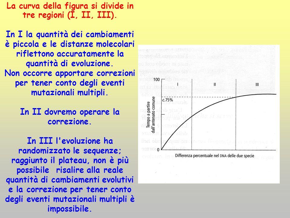 La curva della figura si divide in tre regioni (I, II, III). In I la quantità dei cambiamenti è piccola e le distanze molecolari riflettono accuratame