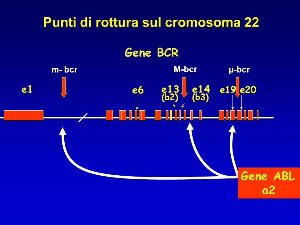 Punti di rottura sul cromosoma 22 e1 e6 e13 e14 e19 (b2) (b3) e20 Gene BCR Gene ABL a2 m- bcr M-bcr µ-bcr