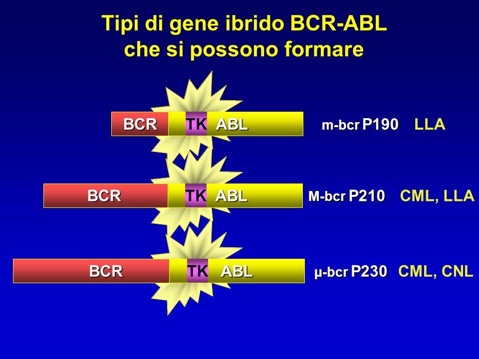 M-bcr P210 µ-bcr P230 m-bcr P190 LLA CML, LLA CML, CNL Tipi di gene ibrido BCR-ABL che si possono formareBCRABLTK BCRABL BCRABL