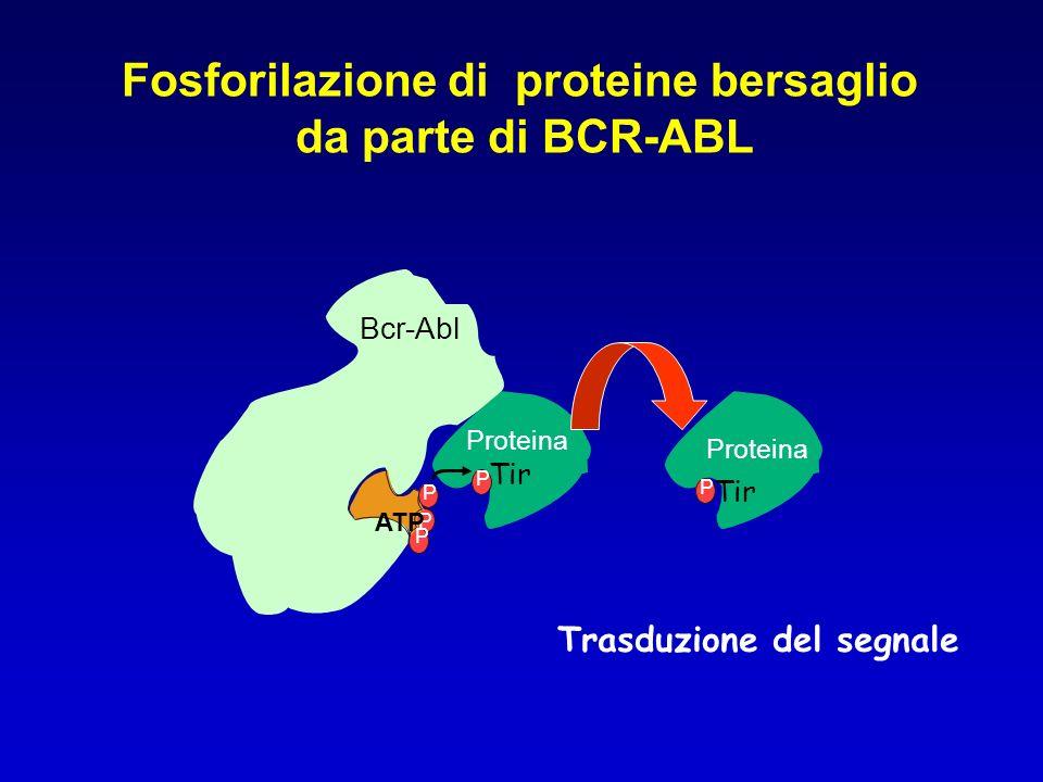 Bcr-Abl P P ATP P Fosforilazione di proteine bersaglio da parte di BCR-ABL Proteina Tir Proteina P Tir P Trasduzione del segnale