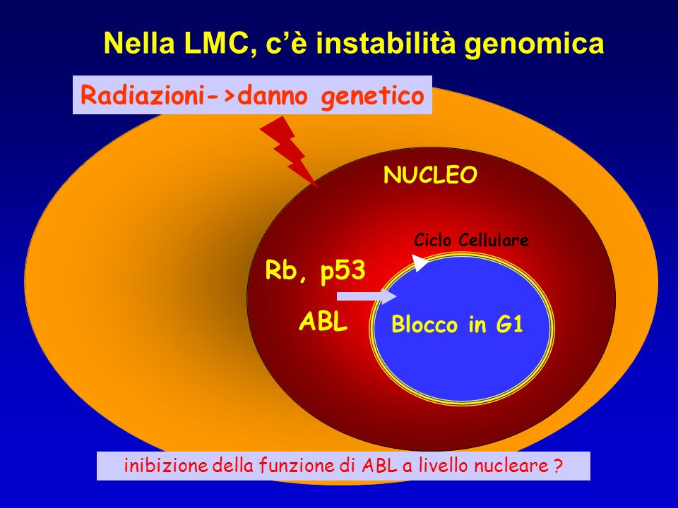 NUCLEO Ciclo Cellulare ABL Nella LMC, cè instabilità genomica Radiazioni->danno genetico Rb, p53 Blocco in G1 inibizione della funzione di ABL a livel