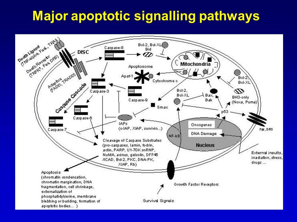 Major apoptotic signalling pathways