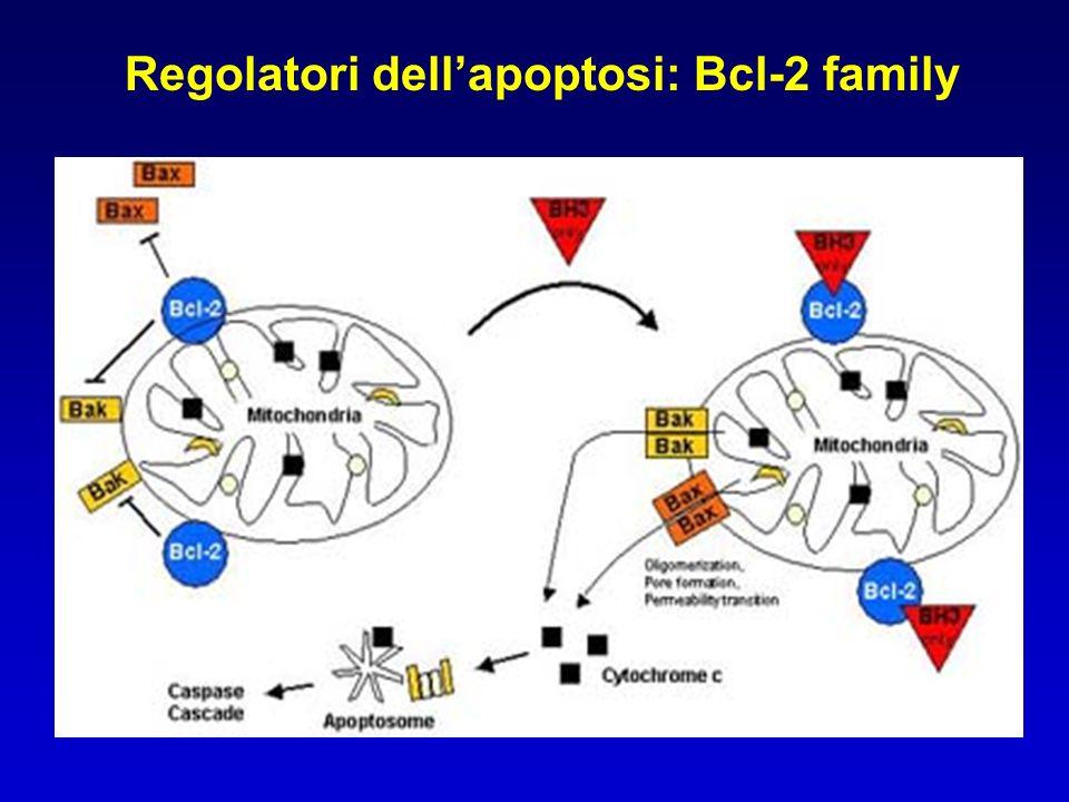 Regolatori dellapoptosi: Bcl-2 family