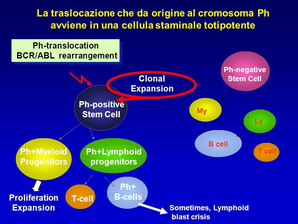 Progressione della Leucemia Mieloide Cronica ANNI 1 2 3 4 5 Clone indifferenziato, crisi blastica Accumulo di difetti genetici addizionali