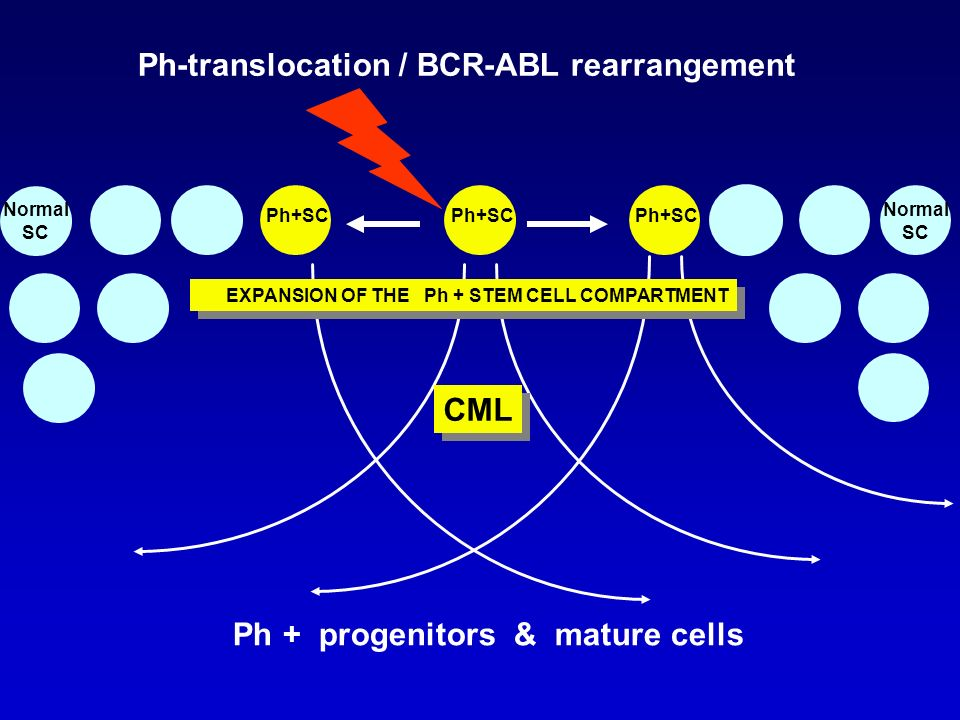 Ph+SC Ph + progenitors & mature cells Ph-translocation / BCR-ABL rearrangement Normal SC Normal SC EXPANSION OF THE Ph + STEM CELL COMPARTMENT CML