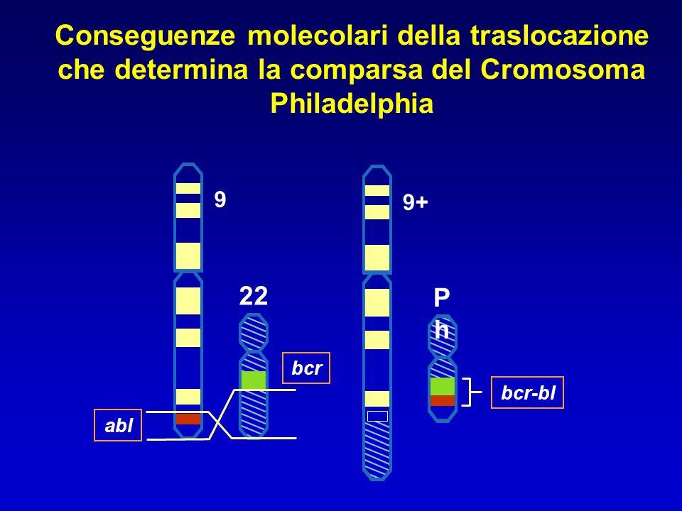 22 bcr abl 9 Conseguenze molecolari della traslocazione che determina la comparsa del Cromosoma Philadelphia PhPh bcr-bl 9+