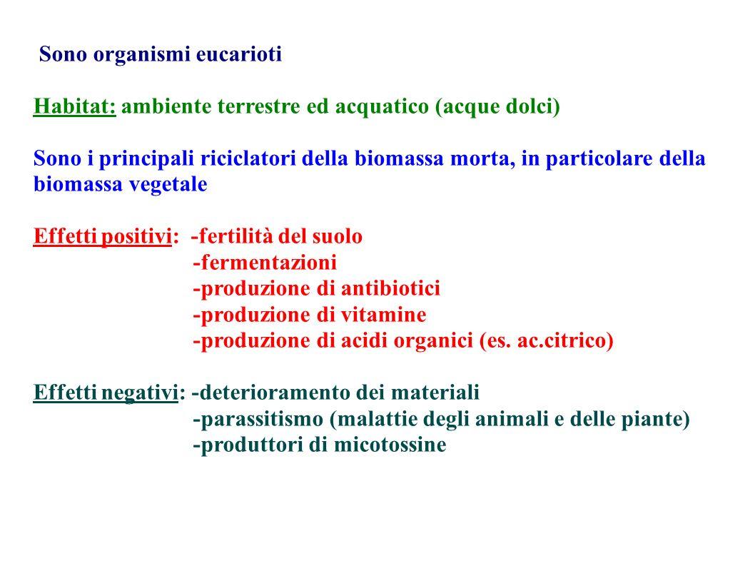 Sono organismi eucarioti Habitat: ambiente terrestre ed acquatico (acque dolci) Sono i principali riciclatori della biomassa morta, in particolare del