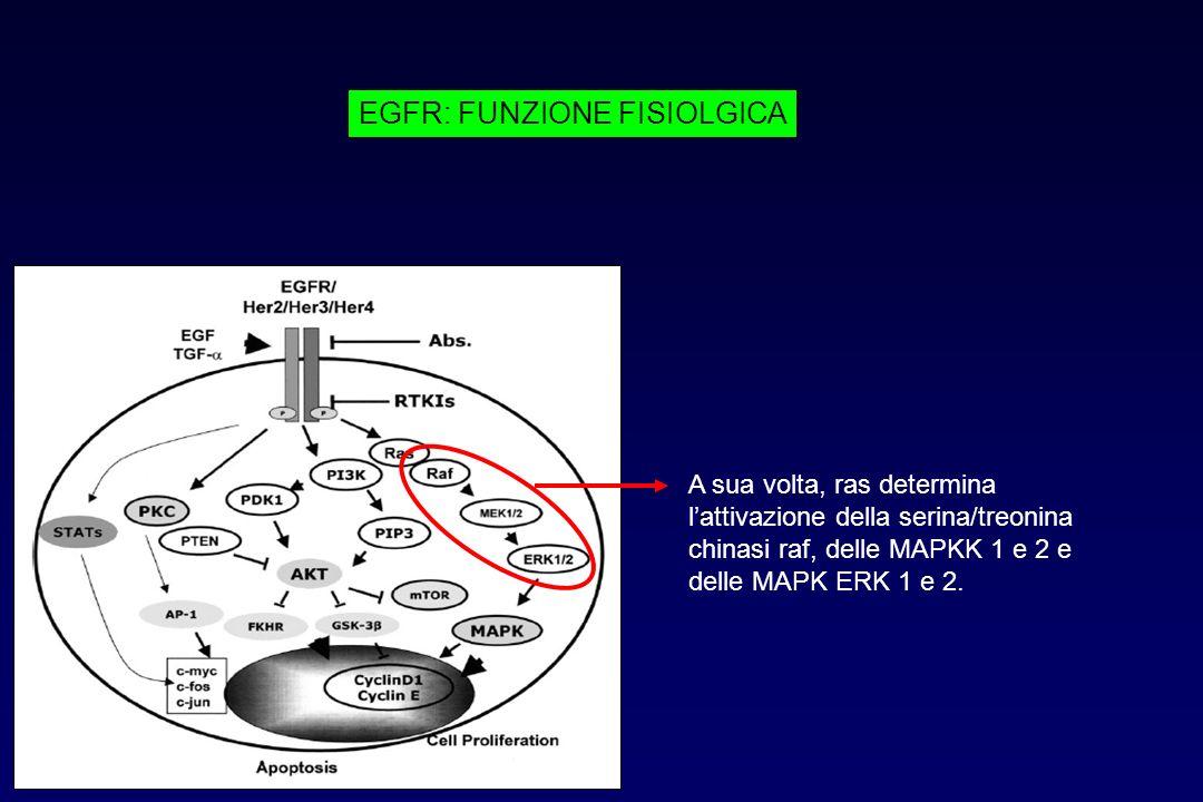 A sua volta, ras determina lattivazione della serina/treonina chinasi raf, delle MAPKK 1 e 2 e delle MAPK ERK 1 e 2. EGFR: FUNZIONE FISIOLGICA