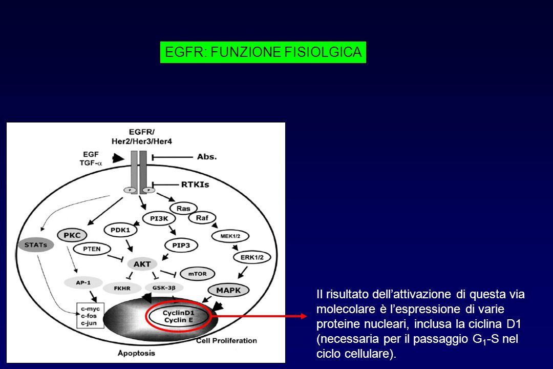 Il risultato dellattivazione di questa via molecolare è lespressione di varie proteine nucleari, inclusa la ciclina D1 (necessaria per il passaggio G