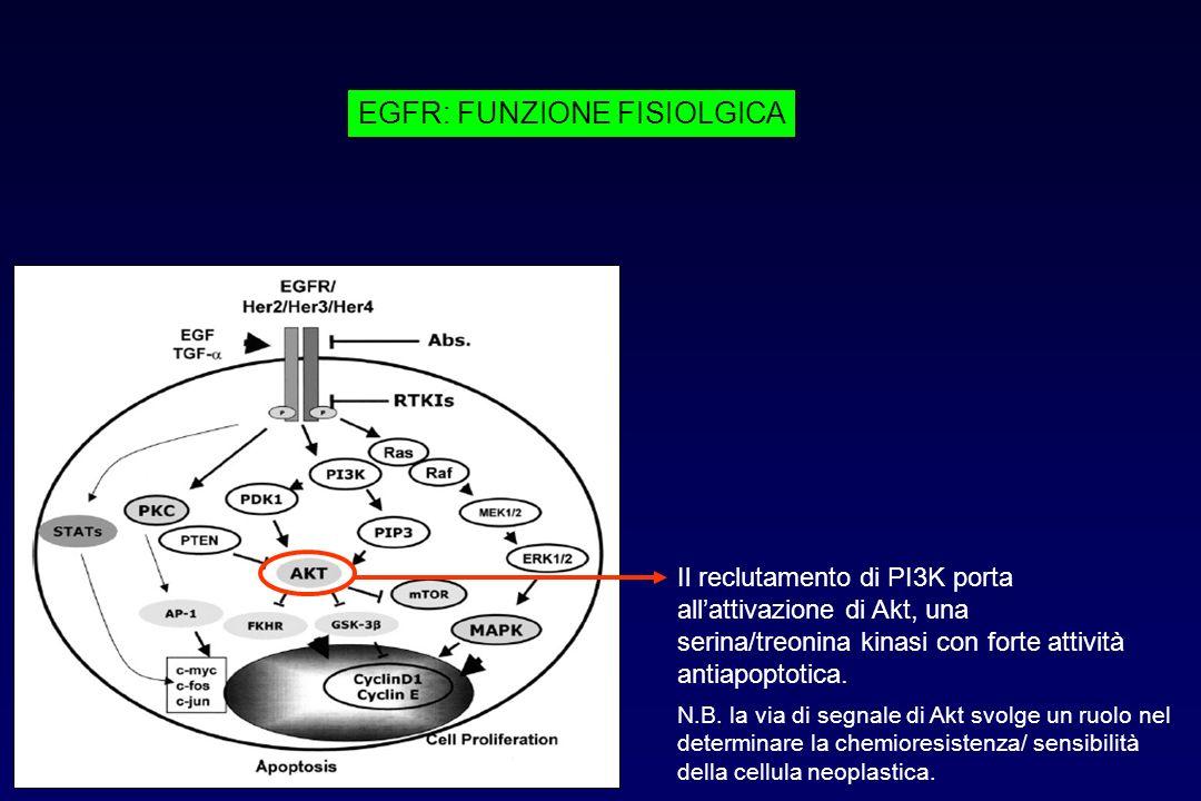 Il reclutamento di PI3K porta allattivazione di Akt, una serina/treonina kinasi con forte attività antiapoptotica. N.B. la via di segnale di Akt svolg
