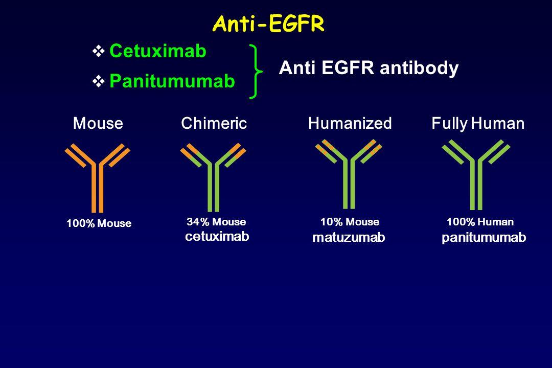 Anti-EGFR Cetuximab Panitumumab cetuximab matuzumabpanitumumab 100% Mouse 34% Mouse10% Mouse100% Human MouseFully HumanHumanizedChimeric Anti EGFR ant