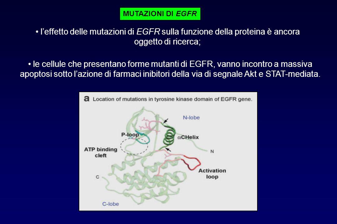 leffetto delle mutazioni di EGFR sulla funzione della proteina è ancora oggetto di ricerca; le cellule che presentano forme mutanti di EGFR, vanno inc