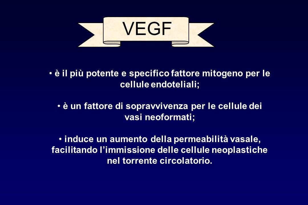 VEGF è il più potente e specifico fattore mitogeno per le cellule endoteliali; è un fattore di sopravvivenza per le cellule dei vasi neoformati; induc