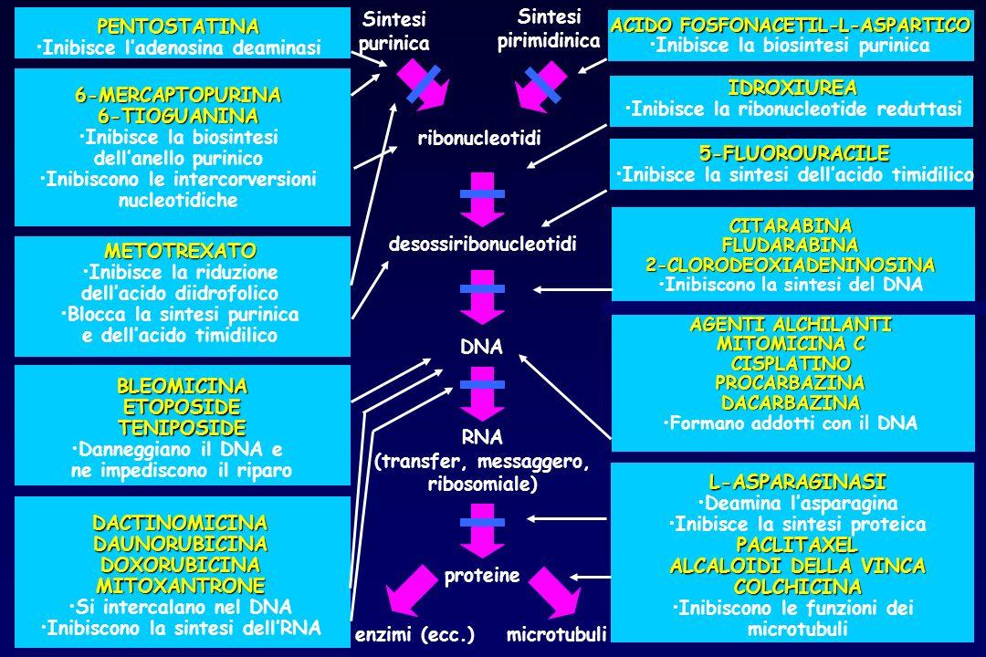ACIDO FOSFONACETIL-L-ASPARTICO Inibisce la biosintesi purinica 5-FLUOROURACILE Inibisce la sintesi dellacido timidilico PENTOSTATINA Inibisce ladenosi