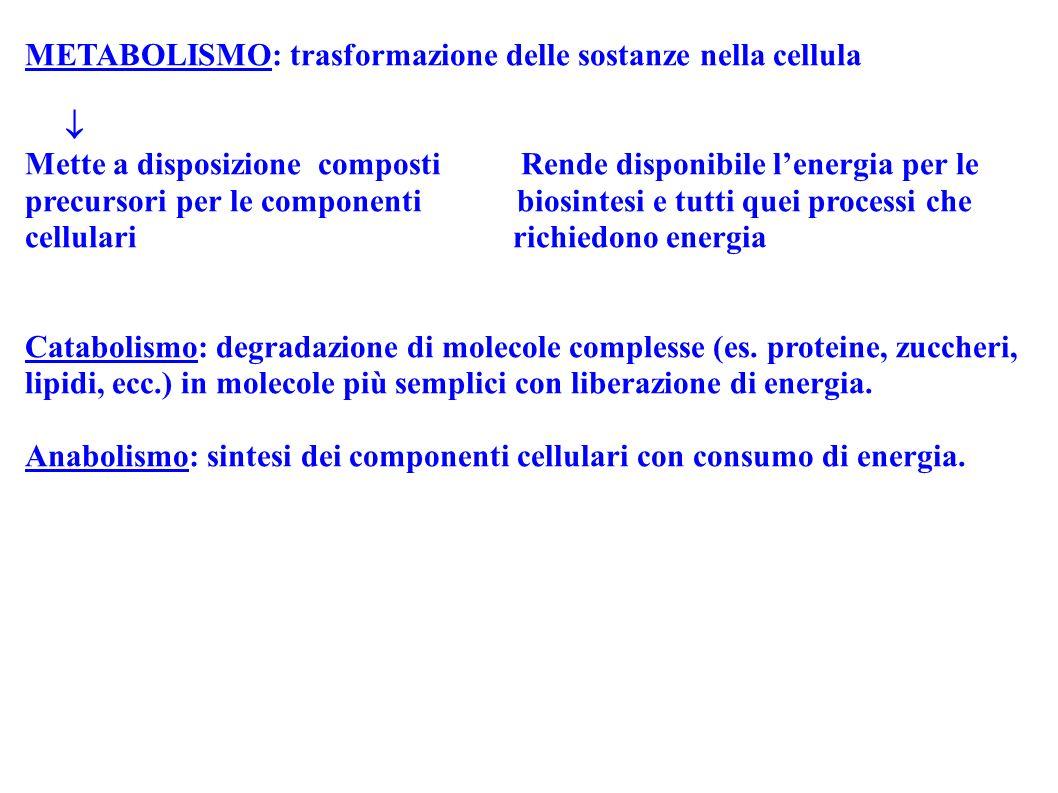 METABOLISMO: trasformazione delle sostanze nella cellula Mette a disposizione composti Rende disponibile lenergia per le precursori per le componenti