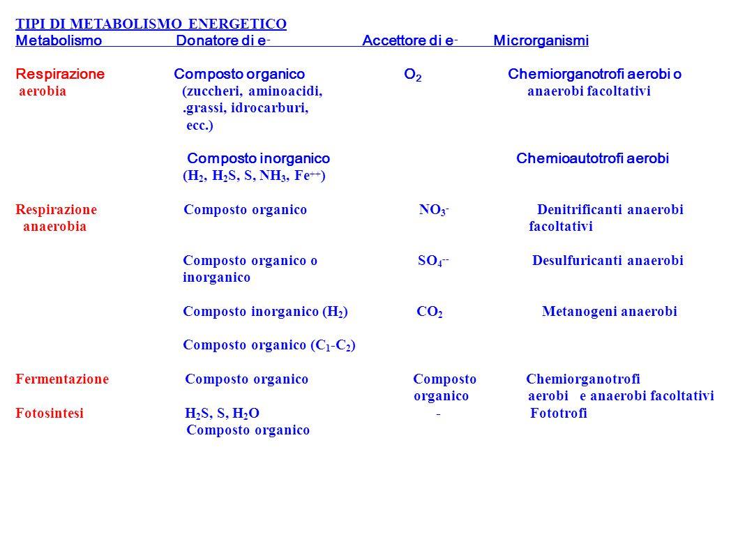TIPI DI METABOLISMO ENERGETICO Metabolismo Donatore di e - Accettore di e - Microrganismi Respirazione Composto organico O 2 Chemiorganotrofi aerobi o
