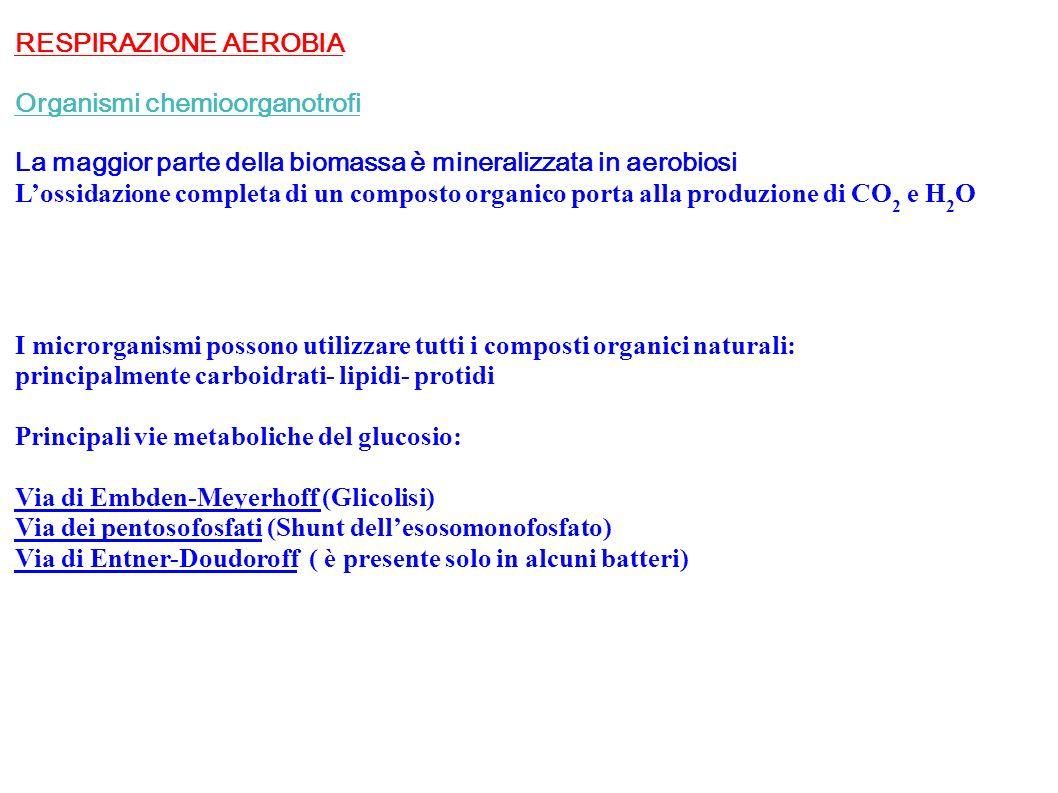 RESPIRAZIONE AEROBIA Organismi chemioorganotrofi La maggior parte della biomassa è mineralizzata in aerobiosi Lossidazione completa di un composto org