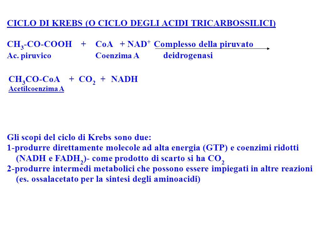 CICLO DI KREBS (O CICLO DEGLI ACIDI TRICARBOSSILICI) CH 3 -CO-COOH + CoA + NAD + Complesso della piruvato Ac. piruvico Coenzima A deidrogenasi CH 3 CO