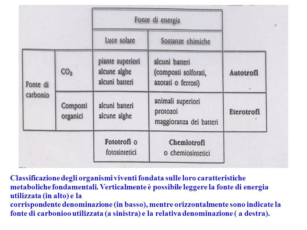 Classificazione degli organismi viventi fondata sulle loro caratteristiche metaboliche fondamentali. Verticalmente è possibile leggere la fonte di ene