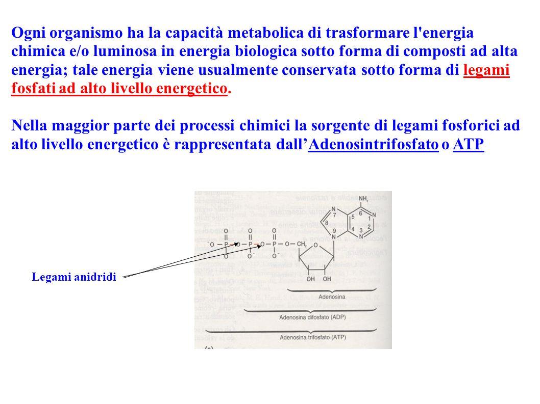 Ogni organismo ha la capacità metabolica di trasformare l'energia chimica e/o luminosa in energia biologica sotto forma di composti ad alta energia; t