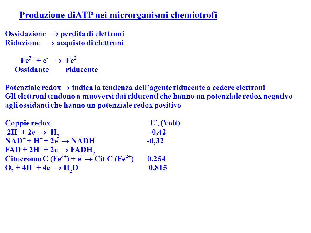 Produzione diATP nei microrganismi chemiotrofi Ossidazione perdita di elettroni Riduzione acquisto di elettroni Fe 3+ + e - Fe 2+ Ossidante riducente