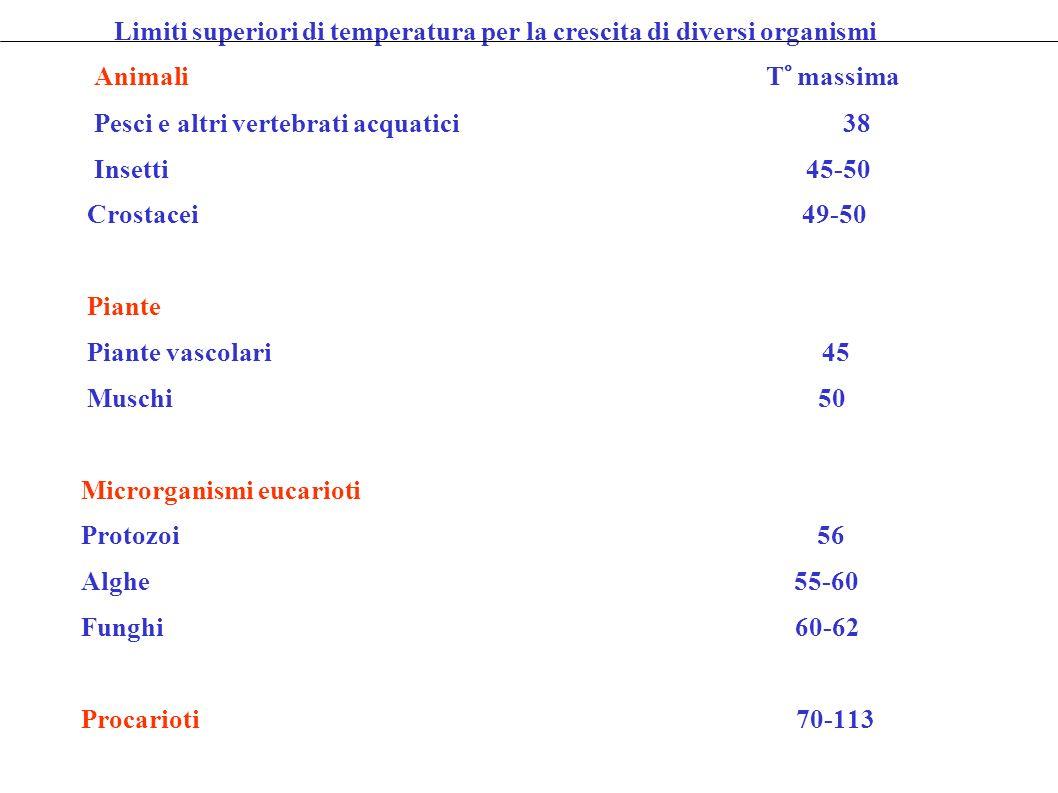 Limiti superiori di temperatura per la crescita di diversi organismi Animali T° massima Pesci e altri vertebrati acquatici 38 Insetti 45-50 Crostacei