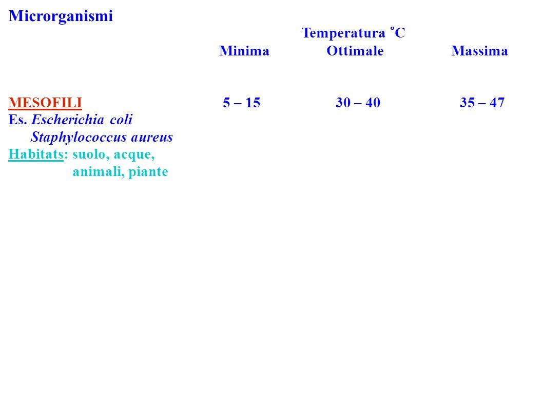 Microrganismi Temperatura °C Minima Ottimale Massima MESOFILI 5 – 15 30 – 40 35 – 47 Es. Escherichia coli Staphylococcus aureus Habitats: suolo, acque