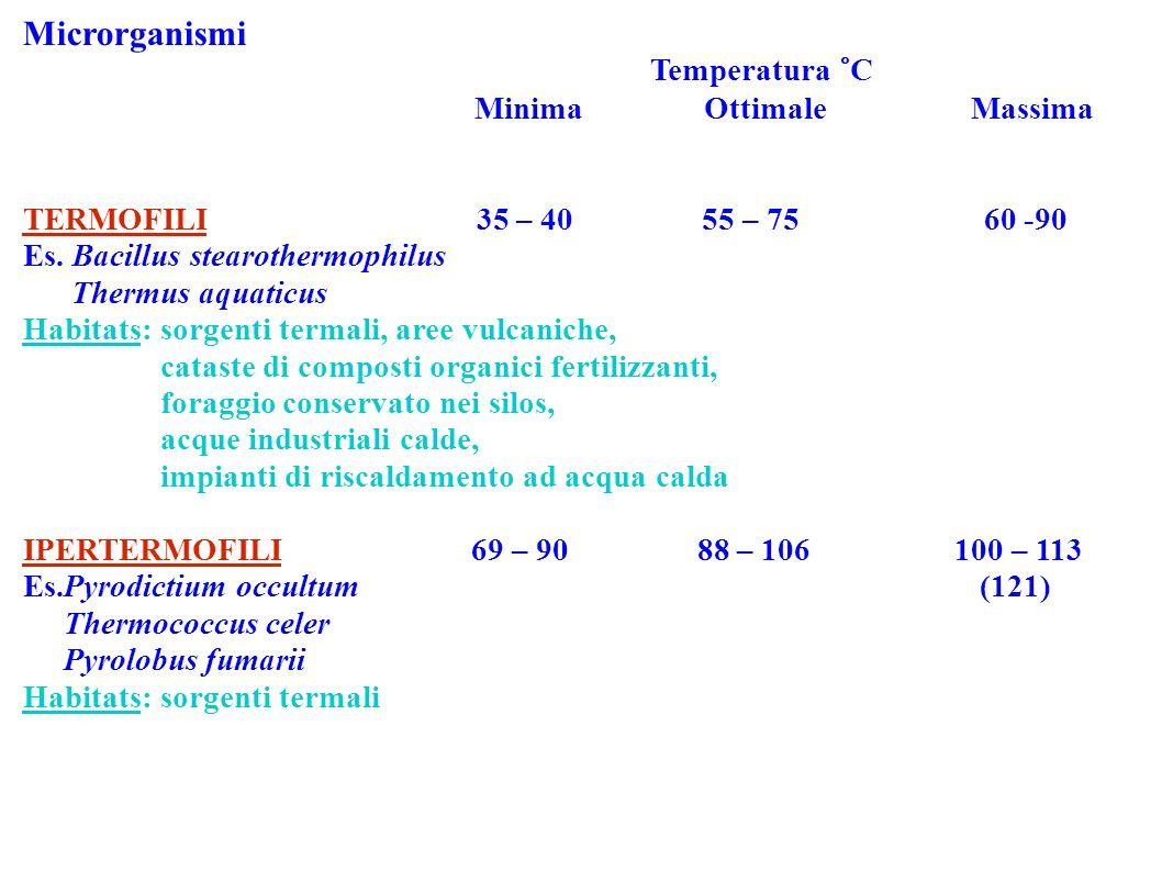Microrganismi Temperatura °C Minima Ottimale Massima TERMOFILI 35 – 40 55 – 75 60 -90 Es. Bacillus stearothermophilus Thermus aquaticus Habitats: sorg