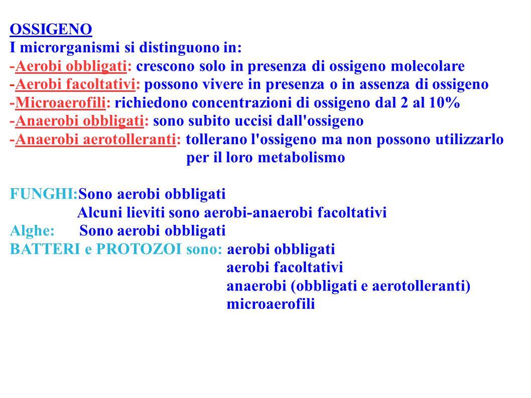 OSSIGENO I microrganismi si distinguono in: -Aerobi obbligati: crescono solo in presenza di ossigeno molecolare -Aerobi facoltativi: possono vivere in