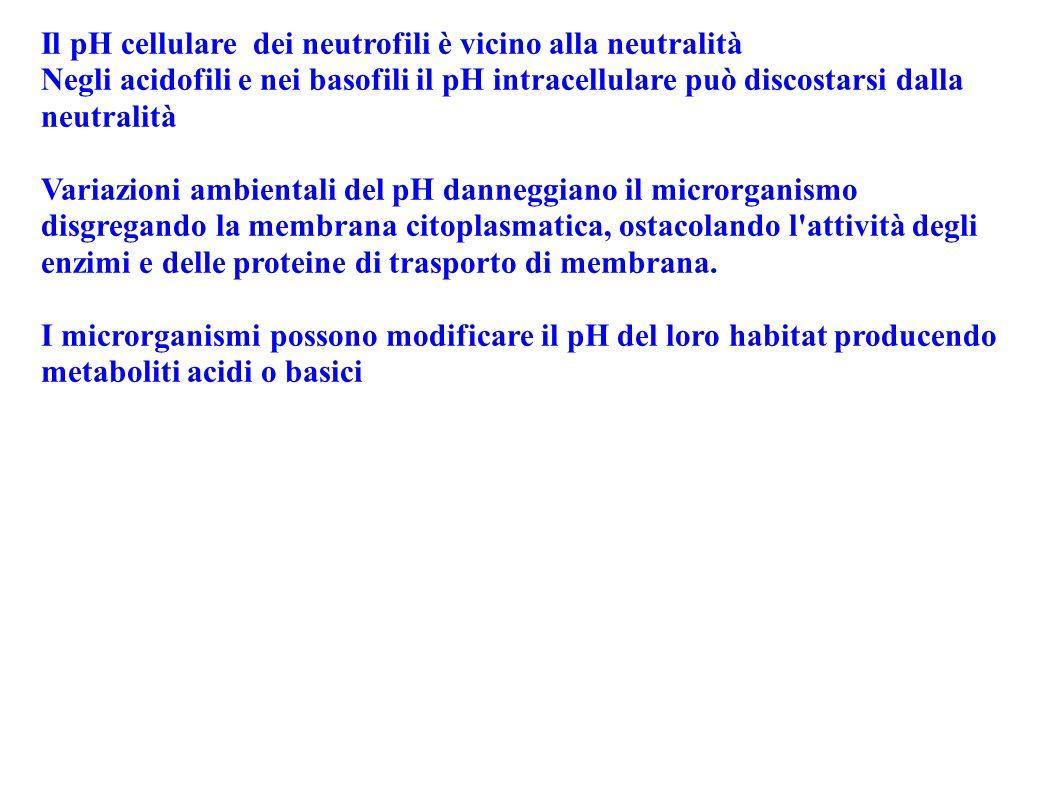 Il pH cellulare dei neutrofili è vicino alla neutralità Negli acidofili e nei basofili il pH intracellulare può discostarsi dalla neutralità Variazion