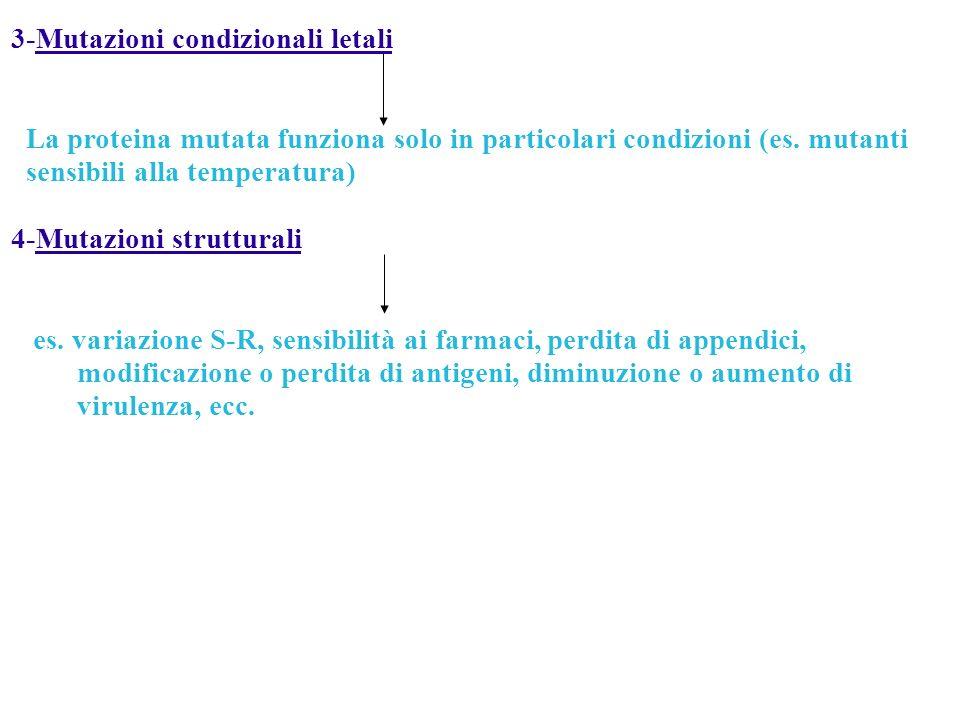 3-Mutazioni condizionali letali La proteina mutata funziona solo in particolari condizioni (es. mutanti sensibili alla temperatura) 4-Mutazioni strutt