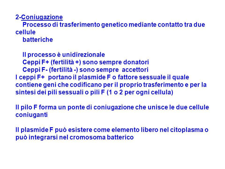 2-Coniugazione Processo di trasferimento genetico mediante contatto tra due cellule batteriche Il processo è unidirezionale Ceppi F+ (fertilità +) son