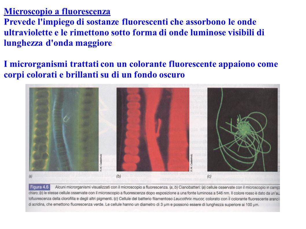 Microscopio a fluorescenza Prevede l'impiego di sostanze fluorescenti che assorbono le onde ultraviolette e le rimettono sotto forma di onde luminose