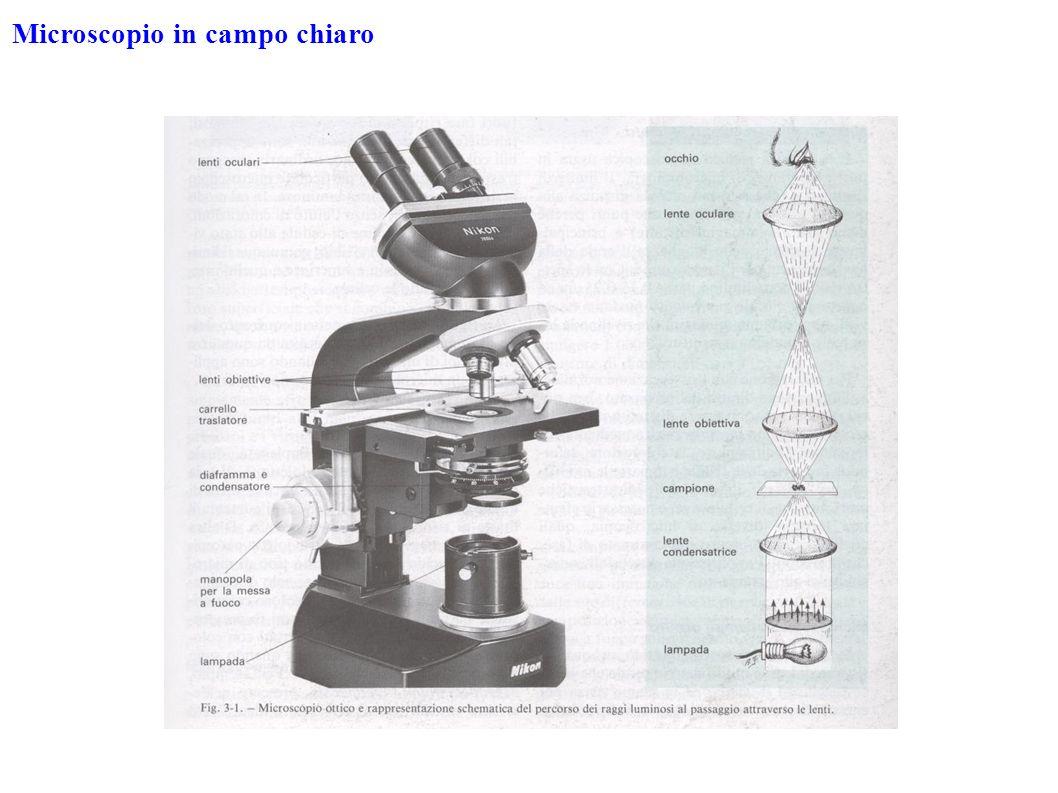 Microscopio in campo chiaro