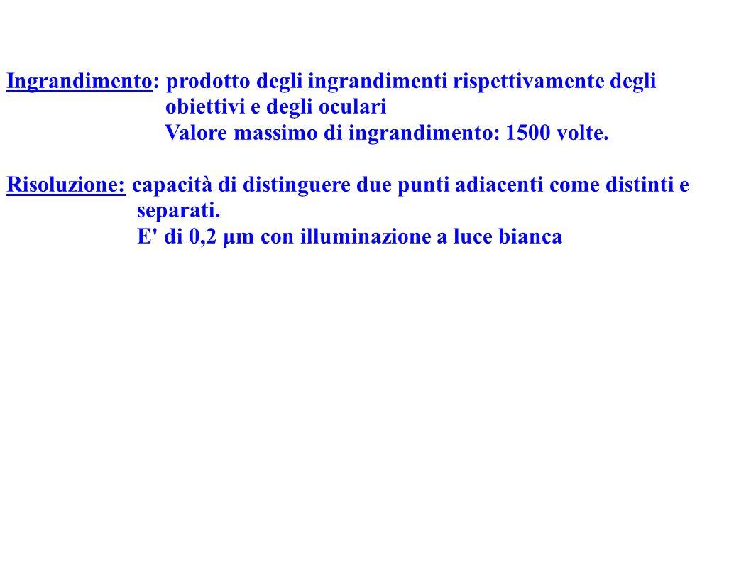 Obiettivi a secco Obiettivi ad immersione (per maggiori ingrandimenti) Olio (di legno di cedro- di vaselina): ha lo stesso indice di rifrazione del vetro.