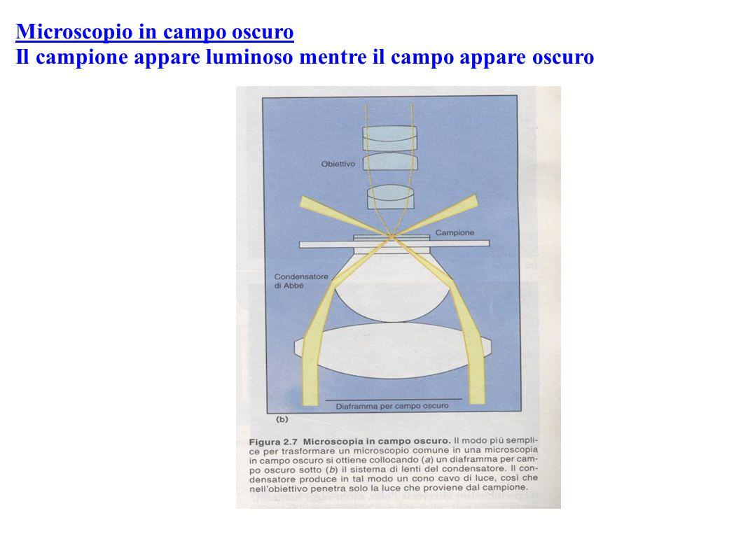 Treponema pallidum Volvox e Spirogyra