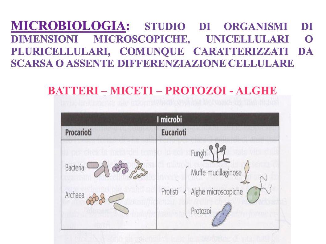 MICROBIOLOGIA: STUDIO DI ORGANISMI DI DIMENSIONI MICROSCOPICHE, UNICELLULARI O PLURICELLULARI, COMUNQUE CARATTERIZZATI DA SCARSA O ASSENTE DIFFERENZIA