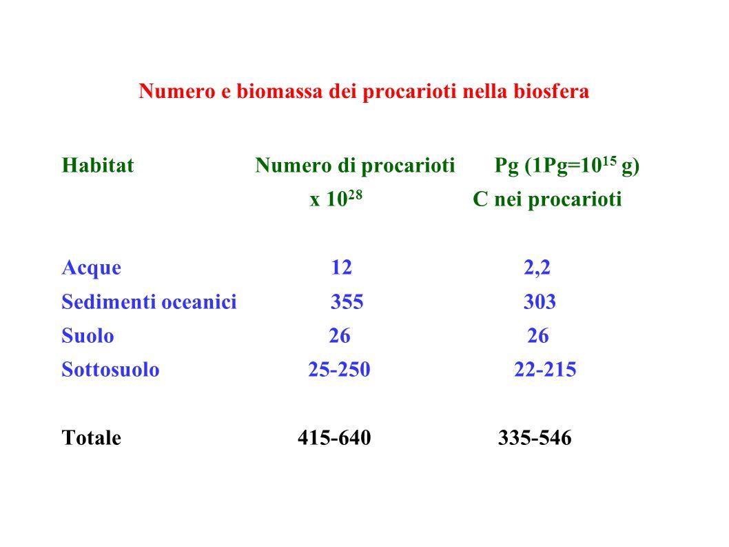 Numero e biomassa dei procarioti nella biosfera Habitat Numero di procarioti Pg (1Pg=10 15 g) x 10 28 C nei procarioti Acque 12 2,2 Sedimenti oceanici