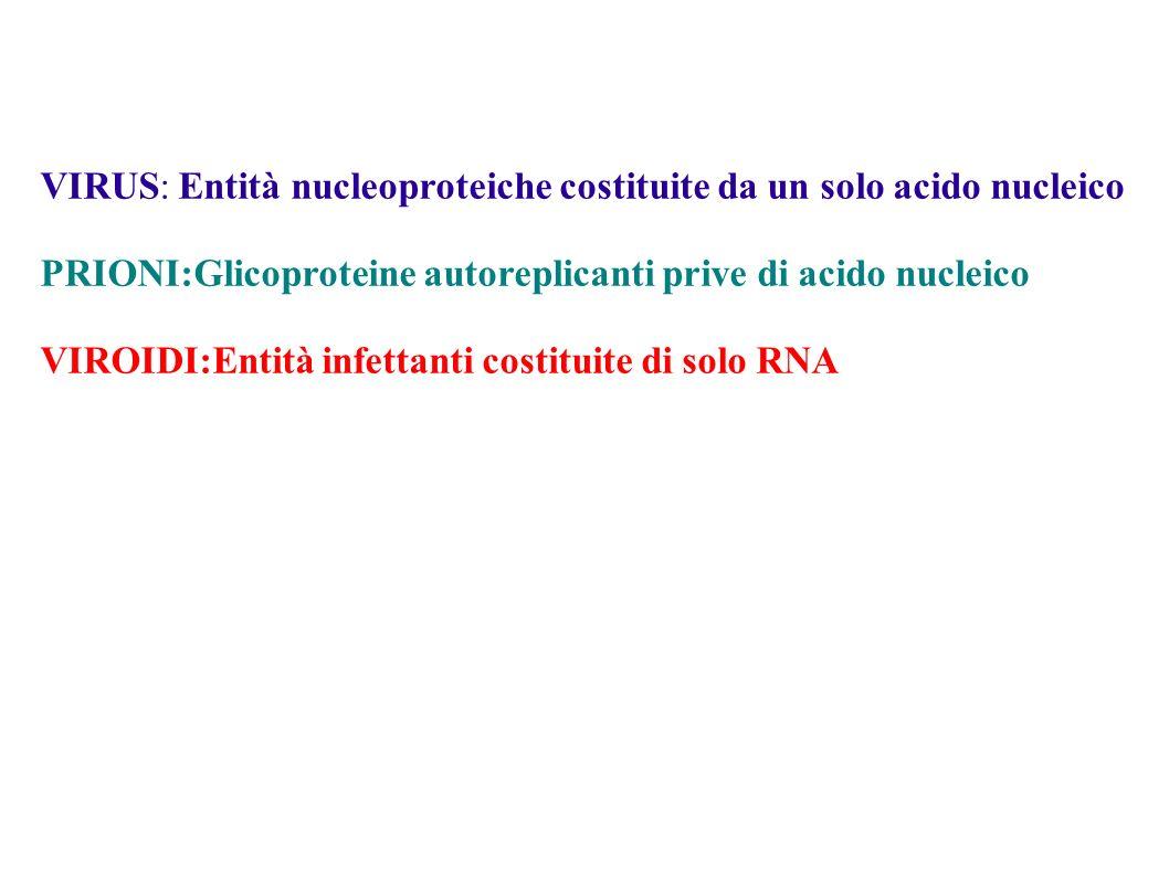 VIRUS: Entità nucleoproteiche costituite da un solo acido nucleico PRIONI:Glicoproteine autoreplicanti prive di acido nucleico VIROIDI:Entità infettan