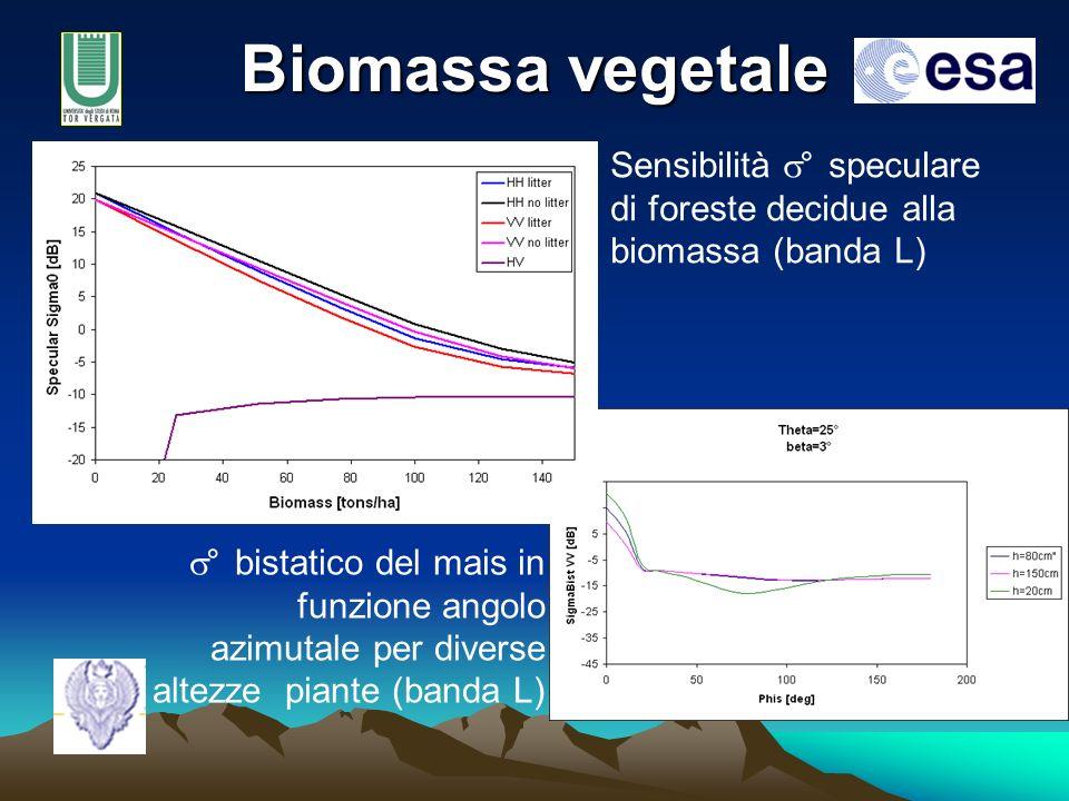 Biomassa vegetale Sensibilità ° speculare di foreste decidue alla biomassa (banda L) ° bistatico del mais in funzione angolo azimutale per diverse altezze piante (banda L)