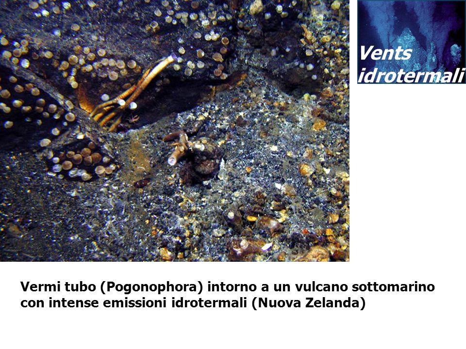 Vermi tubo (Pogonophora) intorno a un vulcano sottomarino con intense emissioni idrotermali (Nuova Zelanda) Vents idrotermali