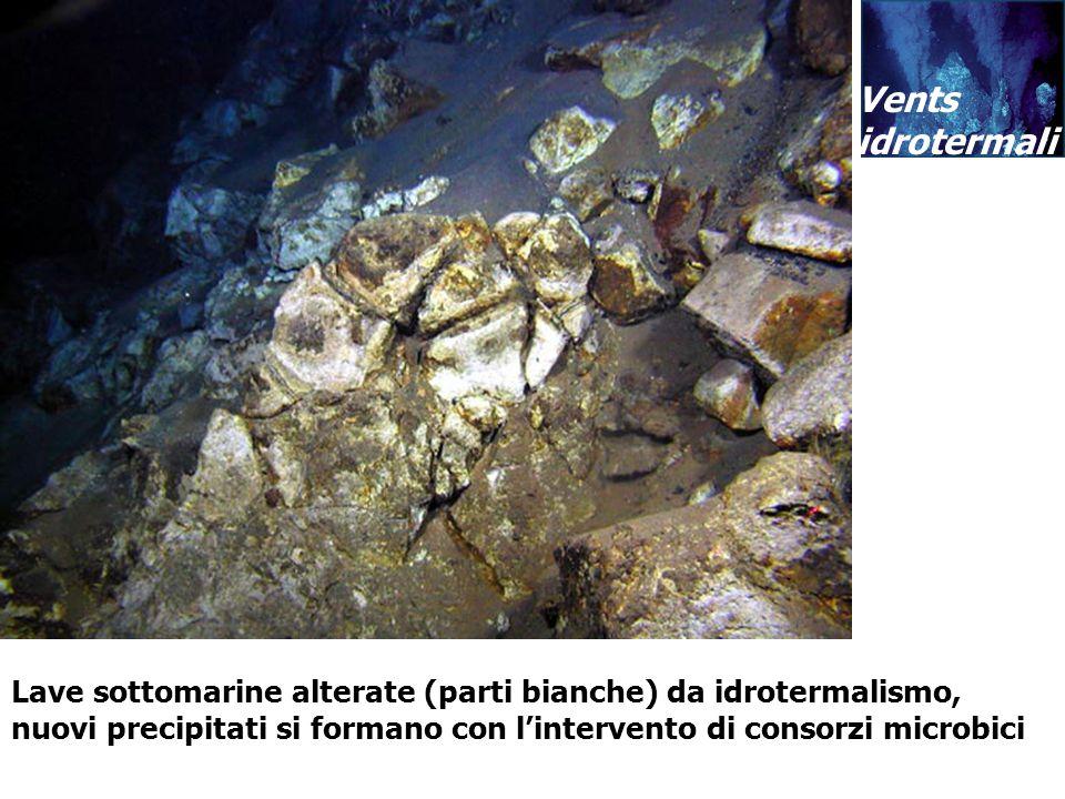 Vents idrotermali Lave sottomarine alterate (parti bianche) da idrotermalismo, nuovi precipitati si formano con lintervento di consorzi microbici Vent